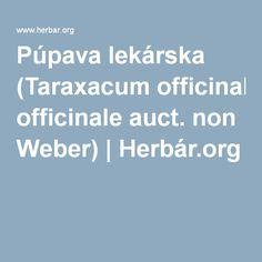 Púpava lekárska (Taraxacum officinale auct. non Weber) | Herbár.org