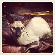 Kat von D's cat. So cool