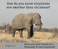 Elephant jokes - photo#7