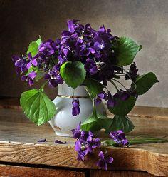 Bouquet of violets, Photo by Ernesto Cortazar