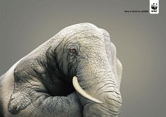 give a hand to wildlife campaign | Design You Trust. World's Most Famous Social Inspiration.