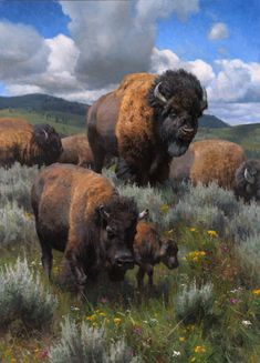 Kyle Sims - A Yellowstone Migration American Bison, American Animals, Native American Art, Wildlife Paintings, Wildlife Art, Animal Paintings, Buffalo Animal, Buffalo Art, Wildlife Photography