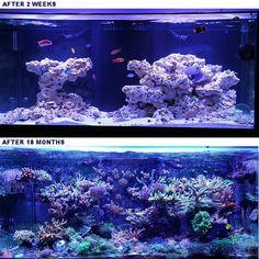Marine Tank, Marine Fish, Aquascaping, Fish Rocks, Saltwater Fish Tanks, Diy Aquarium, Live Rock, How Many People, Red Sea