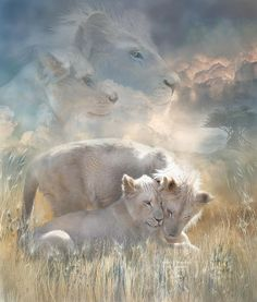 Two white lions so young and beautiful how their spirit of innocence fills the Universe.  Spirits Of Innocence prose by Carol Cavalaris.    This artwork of two young white lions, a male and female cuddling in the soft brush of the Serengeti, with two lion spirits becoming a part of the sky and clouds, is from the Spirit Of The Wild - Big Cats Collection of art by Carol Cavalaris.