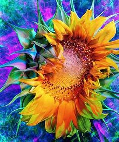 Sonflowers R gods brilliant mistake ! ~Artists throughout history have appreciated the sunflower's unique splendor, and those of the Impressionist era were especially fixated on the flower. ~