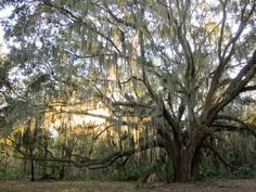 16 Perfect Places To Go In Florida If You're Feeling Adventurous  Payne's Prairie Preserve State Park, Micanopy