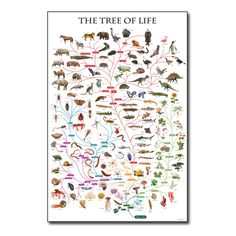 Tree of Life Chart - Cladistics