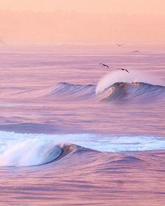 Gulls over ocean waves