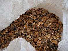 Excellent recyclage : utiliser les brisures de coquilles de noix et en faire un paillage pour éviter l'évaporation des plantes en pot. Aujardin.org