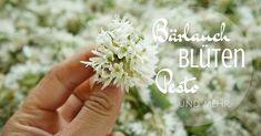 Lisa im Pestofieber! Bärlauchpesto kennt man ja... aber Bärlauchblüten? Mach dein eigenes Bärlauchblütenpesto und probier auch mal Brennnesselpesto! Pesto Hummus, Kraut, Chutney, Dips, Snacks, Floral, Flowers, Food, Chef Recipes