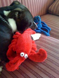 #JoesCrabShack  dog's best friend