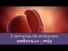 ac5209c5b 3 semanas de embarazo - Primer mes - EMBARAZOYMAS