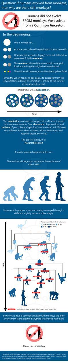 Evolution handout