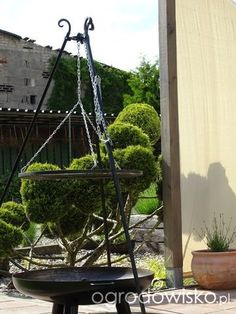 Moja walka z wiatrakami czyli kamieniołom trochę z przypadku - strona 728 - Forum ogrodnicze - Ogrodowisko