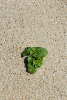 """Primum veridi (The origin of the green) "" by nikosono from his «Contemplates» photo archives"