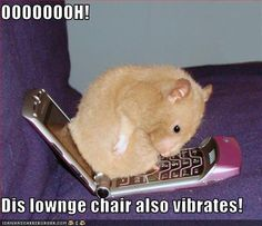 funny picture of hamster 438 Cute Animals With Funny Captions, Animal Captions, Funny Animal Memes, Animal Quotes, Animal Humor, Funny Humor, Most Famous Memes, Funny Hamsters, Dwarf Hamsters