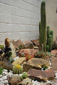 con piedras cactus rock garden - My Gardening Space Rockery Garden, Dry Garden, Garden Landscaping, Xeriscaping, Cacti And Succulents, Cactus Plants, Stone Cactus, Rock Garden Design, Desert Plants