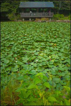 Botanical garden in Nagoya, Japan. My birthplace.