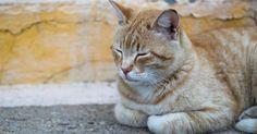 Salvò mamma-gatta: altrove sarebbe un'eroina, in Italia va a processo