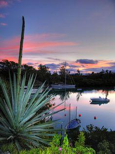 Placidity (Bermuda)