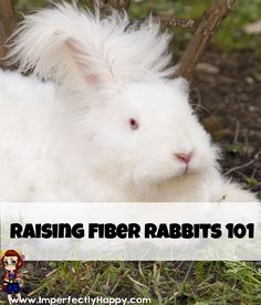 Are you considering raising fiber rabbits on your homestead? They can be a great addition to your livestock and a favorite of crafters!