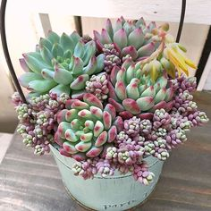 ・・・ May 11, 2016 ブルーエルフさんのお花 可愛い黄色でした ・・・ #ブルーエルフ #エケベリア #多肉植物の花 #Echeveria #succulent #succulents #succulove #succulentlove #succulentlovers #leafandclay #instaplant #succulentwonderland #cactus #succulentgarden #succulents_only #succulentonly #suckerforsucculents #instagood #colorful #plants #lovely #cute #garden #多肉 #多肉植物