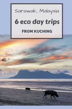 Read More About 6 eco day trips from Kuching: orangutans, proboscis monkeys, rainforests and an eco-friendly place to stay in the capital of Sarawak, Malaysia! Borneo Travel, Malaysia Travel, Travel Tours, Asia Travel, Travel Info, Travel Destinations, Cool Places To Visit, Places To Travel, Vacation Places