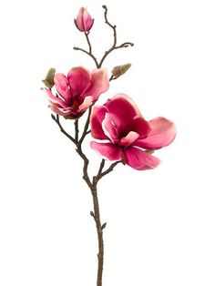 Beautifully made rose silk magnolia flower spray. Product code: sold in packs of Wholesale prices on high quality magnolia stem. Faux Flowers, Silk Flowers, Spring Flowers, Rose Flowers, Magnolia Branch, Magnolia Flower, Watercolor Flowers, Watercolor Paintings, Drawing Flowers