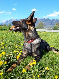 "Hunde Foto: Tanja und Flash & Shakira - "" Frühlingsgefühle "" Hier Dein Bild hochladen: http://ichliebehunde.com/hund-des-tages  #hund #hunde #hundebild #hundebilder #dog #dogs #dogfun  #dogpic #dogpictures"