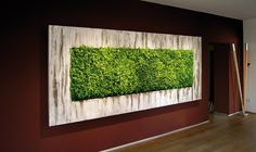 interior plant evergreen wall - Google Search