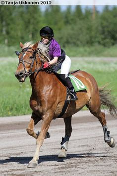 Pilssi 1759-99J - Sukuposti Horse Girl Photography, Funny Tweets, Horse Riding, Riding Helmets, Horses, Animals, Animales, Animaux, Animal