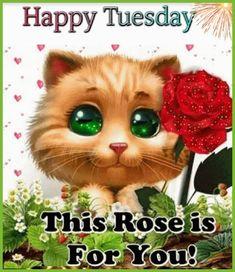 Happy Tuesday, Teddy Bear, Toys, Animals, Activity Toys, Animaux, Animal, Animales, Toy
