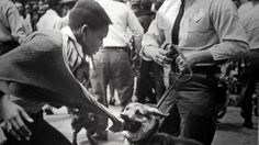 Fifty years ago, they braved police dogs and fire hoses to march against segregation.