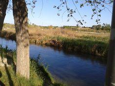 Pasear al sol por la orilla del río para celebrar la primavera =)
