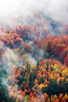 Aerial view of forest in autumn.