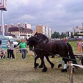Švajčiarske syrové špízy so šunkou (fotorecept) - recept Thing 1, Kefir, Horses, Profile, Horse