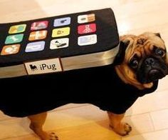 This is how I will dress my pug when I get him. He will hate me