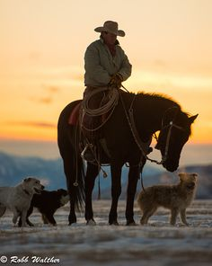 Cowboy holding a morning staff meeting with his dogs. Real Cowboys, Cowboys And Indians, Cowboy Horse, Cowboy And Cowgirl, Western Riding, Western Art, Cowboy Photography, Cowboy Pictures, Cowboy Images
