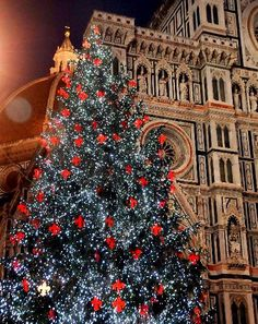 Chritsmas Tree in Florence, Toscana  Italy