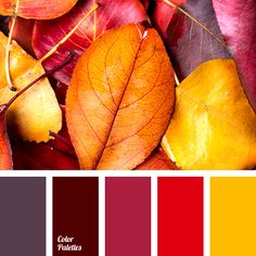 autumn colors 2015, bright yellow, burgundy, color of wine, color solution for fall, magenta, pale purple, repair colors, shades of autumn, wine color.