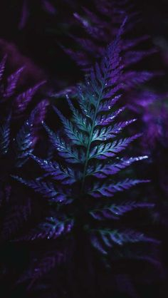 Mini Forest Plants Macro iPhone Wallpaper – Ida Dunno – Join the world of pin Nature Iphone Wallpaper, Plant Wallpaper, Dark Wallpaper, Trendy Wallpaper, Pretty Wallpapers, Galaxy Wallpaper, Flower Wallpaper, Wallpaper Backgrounds, Wallpaper Desktop