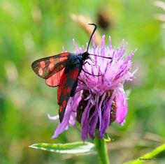 butterfly Tuindouche en Vlinderparadijs