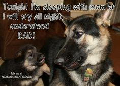 Gsd ~ SO ACCURATE & FUNNY ~