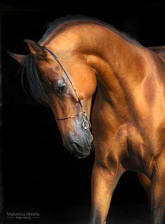 Beautiful horse - by vikarus