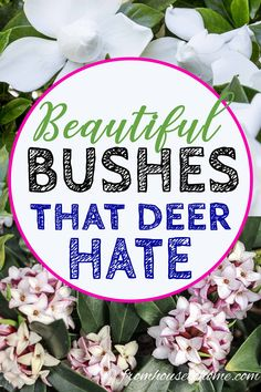 15 Beautiful Deer Resistant Shade Plants To Grow In Your Garden - Gardening @ From House To Home - These shade-loving bushes and perennials have beautiful flowers and are deer resistant plants. Deer Resistant Shade Plants, Deer Resistant Flowers, Deer Resistant Garden, Deer Resistant Perennials, Rabbit Resistant Plants, Shade Loving Shrubs, Shade Shrubs, Shade Perennials, Garden Shrubs