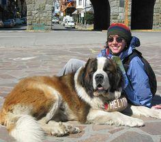 @maiorviagem -  Na Praça do Centro Cívico em Bariloche donos de cães da raça São Bernardo se encontram para oferecer a todos uma foto com seus lindos cachorros que até já viraram símbolo da cidade. Você conseguiria resistir?  #MaiorViagem #Bariloche #Argentina #centrocivicobariloche #sãobernardo #cachorros #dicasdeviagem #blogdeviagem #viagem #travelblog #Regrann by aquelasuaviagem