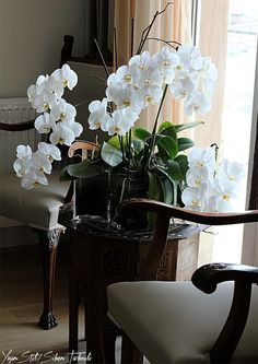 Espacios interiores on pinterest orchid arrangements for Orbe decoracion del hogar