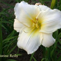 "Photo Courtesy of Crossview Gardens. Used with Permission. ""Christine Reily"""