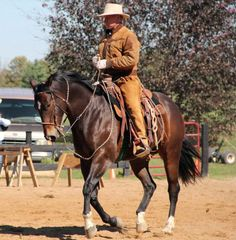"""When you first get started, you're the only one with a vision. Western Riding, Horse Riding, All The Pretty Horses, Beautiful Horses, Buck Brannaman, Horse Training Tips, Cowboy Horse, Natural Horsemanship, Horse Gear"