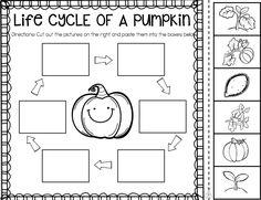 How To Produce Elementary School Much More Enjoyment Pumpkin Activities First Grade - Pumpkin Time - Ship Shape First Grade 1st Grade Science, Kindergarten Science, Teaching Science, Pumpkin Life Cycle, Fall Preschool, Preschool Colors, Classroom Activities, Sequencing Activities, Holiday Activities